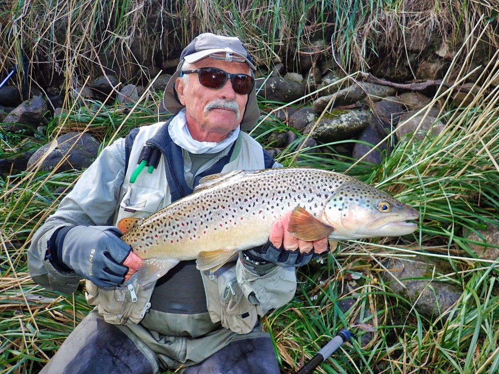 Wild brown trout caugt at Owen River Lodge